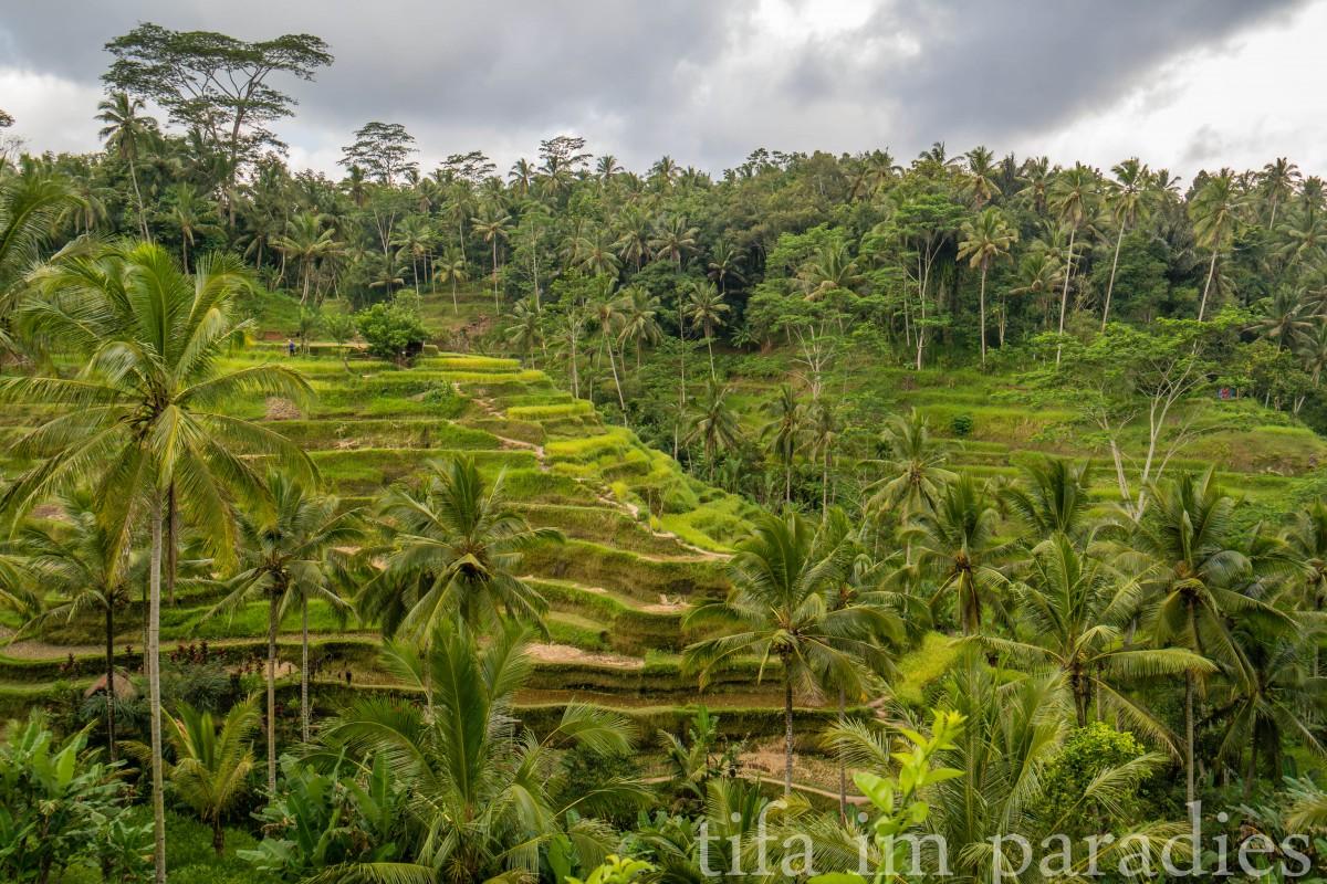Reisterrassen, Bali